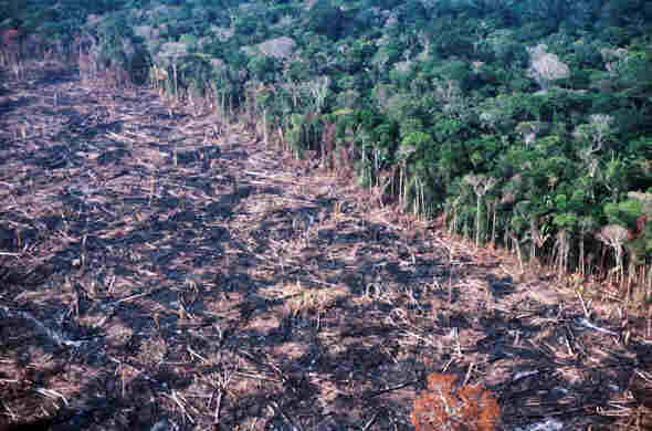 1-felling-in-APA-Triunfo-do-Xingu-credit-blog-da-Floresta-